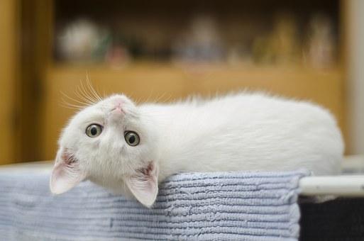 a cute cat: whatsapp dp