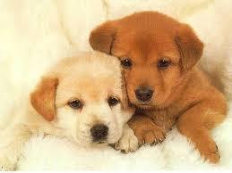Cute puppy whatsapp dp