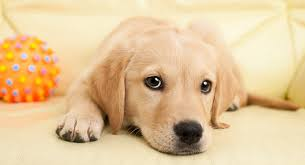 cute, sad dp for whatsapp