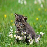 animal dp: Cat with flower open mouth
