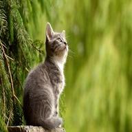 animal dp: cat watching above