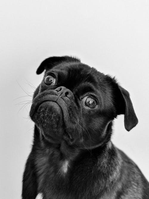 pupy thinking