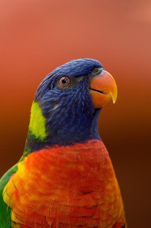 bird dp